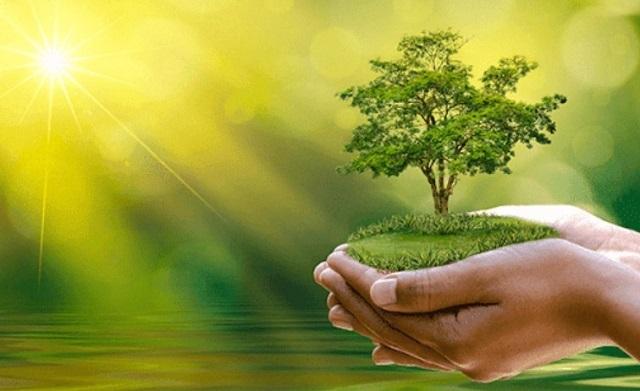 Trồng cây xanh để bảo vệ môi trường