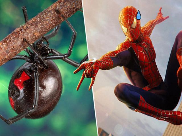 Bị nhện cắn có sao không