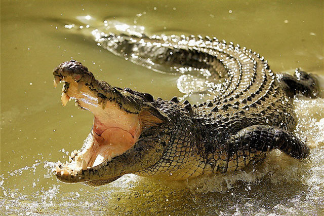 Những con vật nguy hiểm nhất thế giới