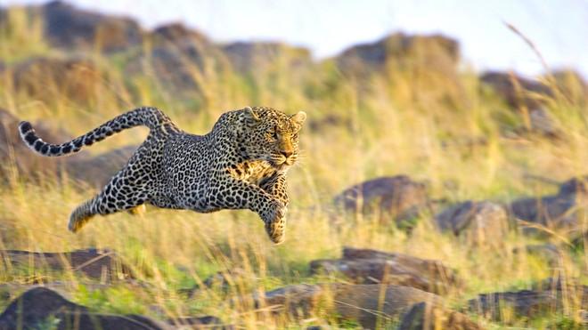 Những động vật nguy hiểm nhất Châu Phi