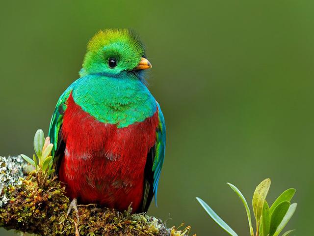 Các loài chim đẹp nhất thế giới