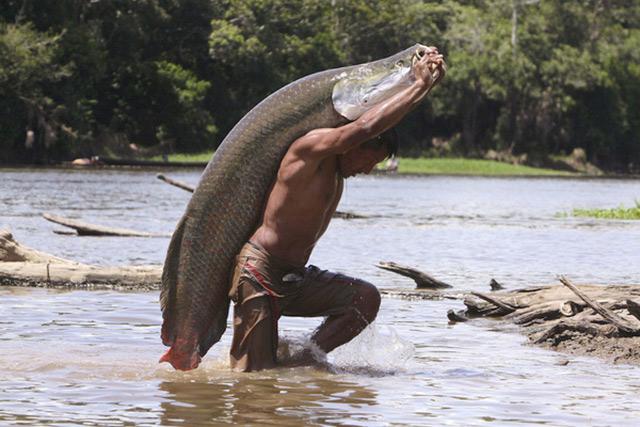 Thuỷ quái sông amazon - cá Arapaima