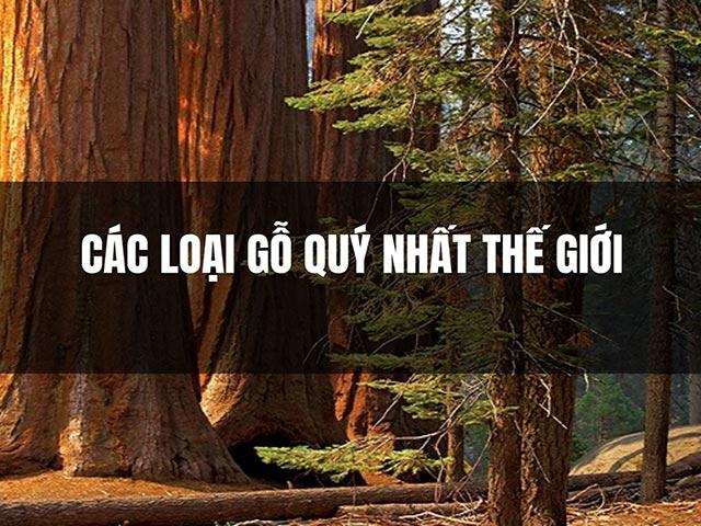 Loại gỗ quý nào đắt nhất?