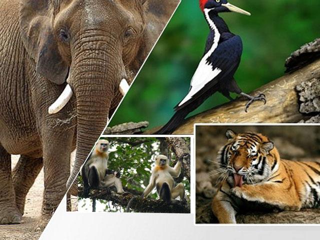 Các loài sinh vật có nguy cơ tuyệt chủng tại Việt Nam