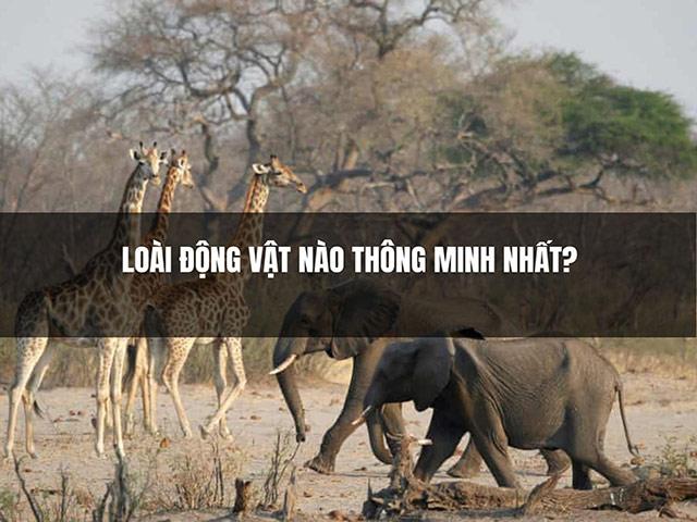 Những loài động vật nào thông minh nhất?