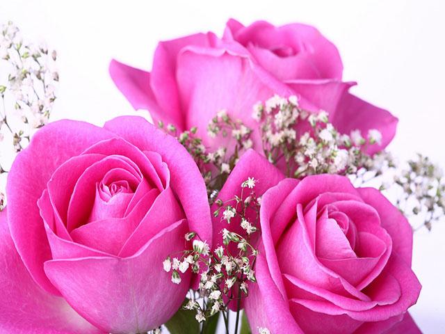 Khám phá những loài hoa đẹp nhất thế giới