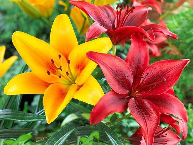 Những loài hoa đẹp nhưng có độc