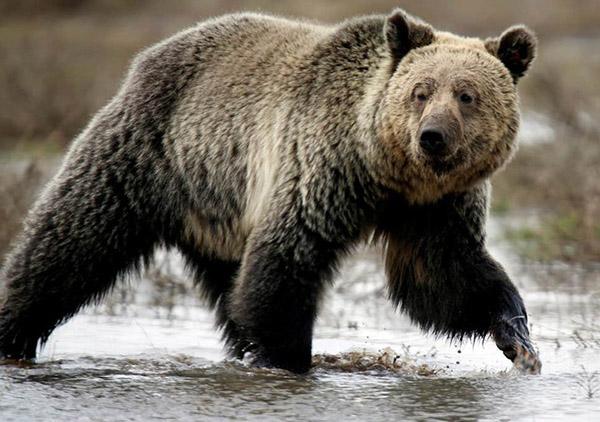 Động vật săn mồi nguy hiểm nhất