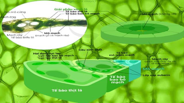 sắc tố quang hợp của cây