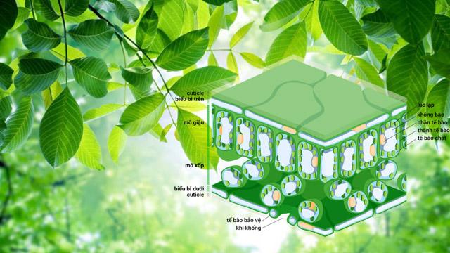 quá trình hút CO2, thải ra O2 giúp cân bằng không khí