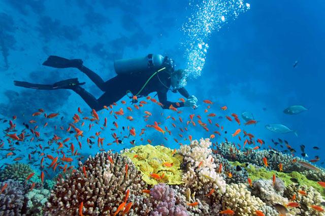 lặn ngắm san hô phú quốc ở đâu