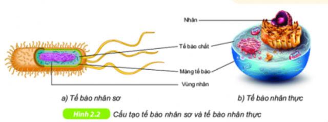 so sánh tế bào nhân sơ và nhân thực