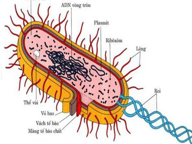 Những thành phần có bên trong của sinh vật nhân sơ