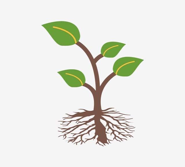 Giải thích vì sao cây trên cạn ngập úng lâu sẽ chết